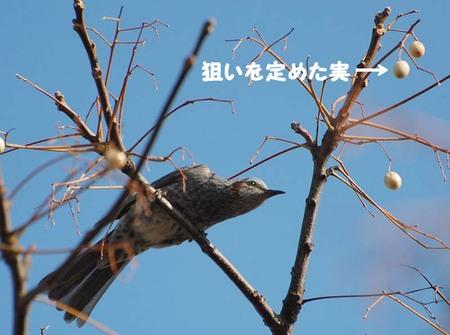 100226hiyodori02181