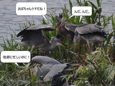 100608aosagimeiwakunako30528