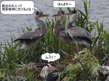 100608aosagimeiwakunako40528