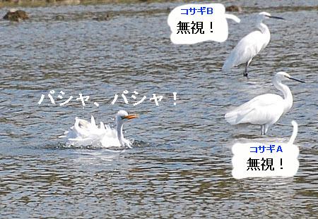071010daisagimizuabi1