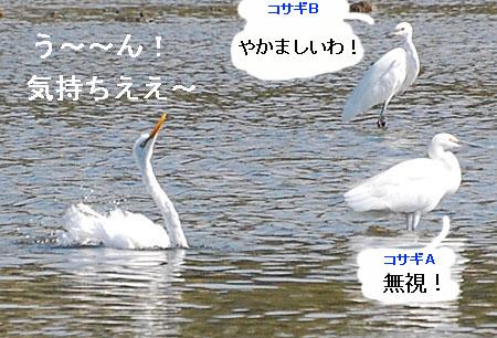 071010daisagimizuabi2