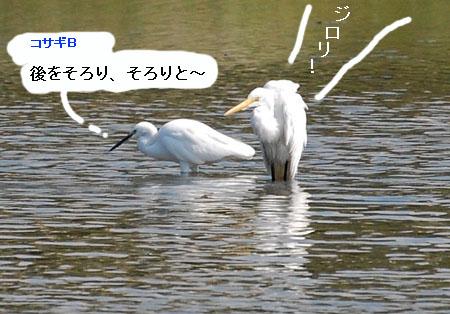 071010daisagimizuabi3