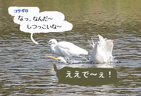 071010daisagimizuabi4