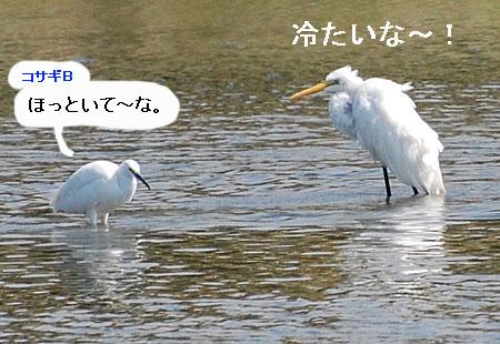 071010daisagimizuabi5