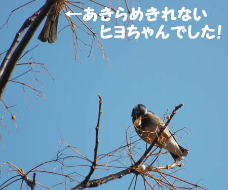 100226hiyotomuku02183jpg